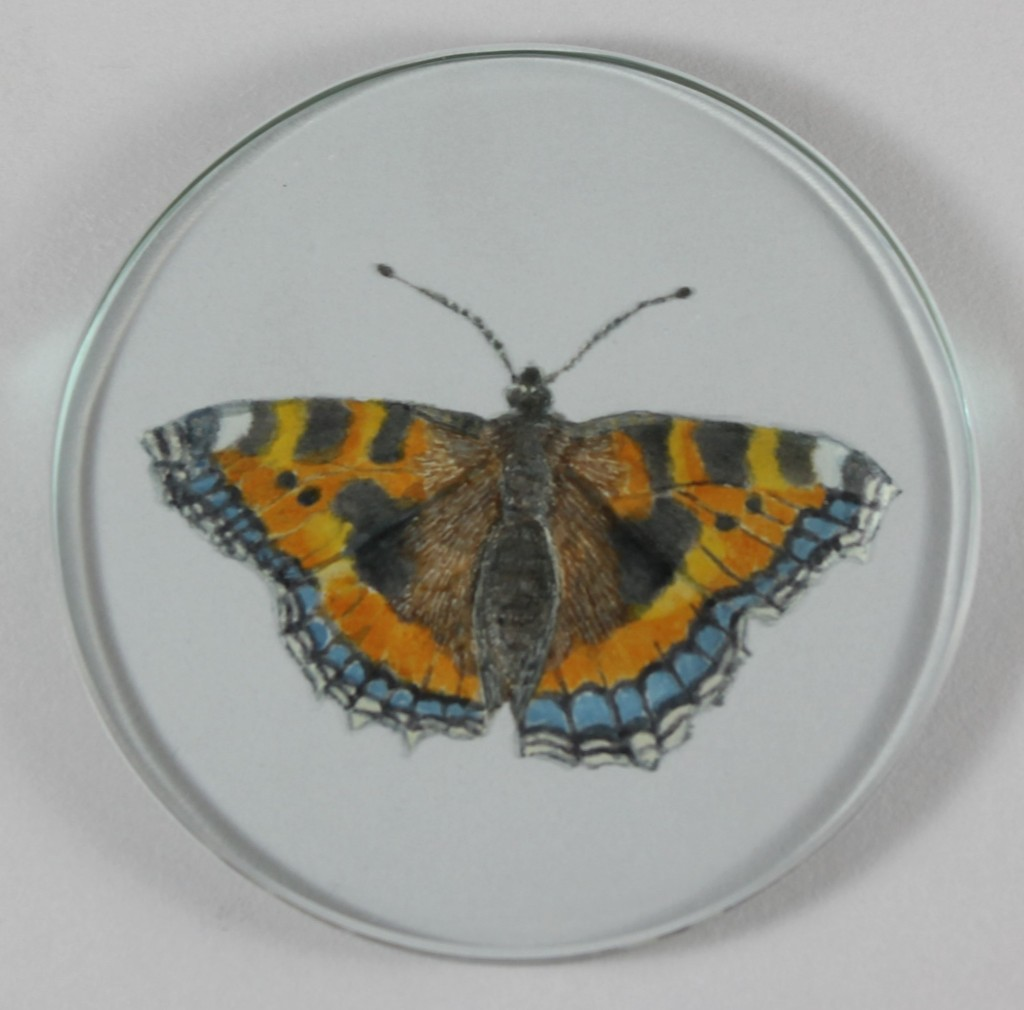 Tortoiseshell Butterfly engaved on glass and painted with fired enamels