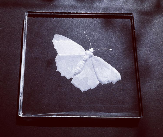 Engraved butterfly on glass